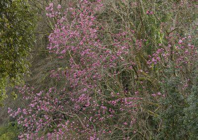Magnolia Mania at Trebah © Charles Francis