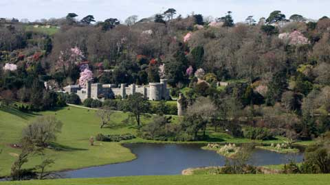 Caerhays Castle Spring Gardens - Great Gardens of Cornwall