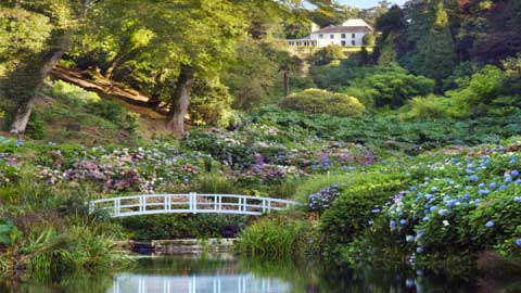 Trebah Gardens - Great Gardens of Cornwall