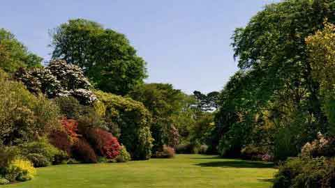 Trewithen - Great Gardens of Cornwall